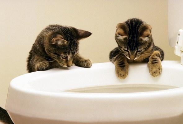 в каком возрасте приучать кота к унитазу