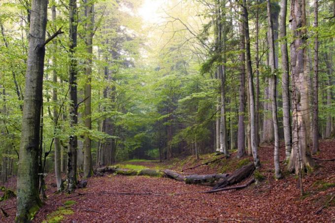 Как купить лес