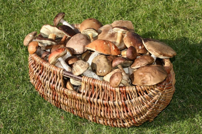 Как обрабатывать грибы пошаговое приготовление блюда ...