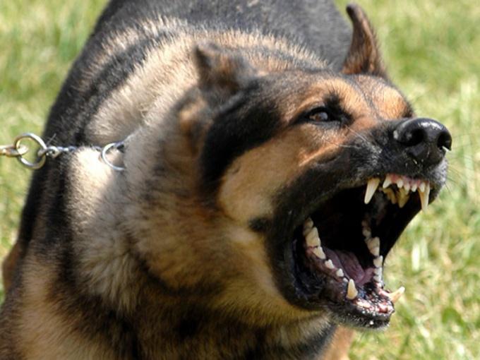 защититься от нападения собак