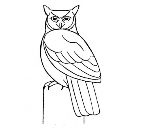 Как нарисовать филина