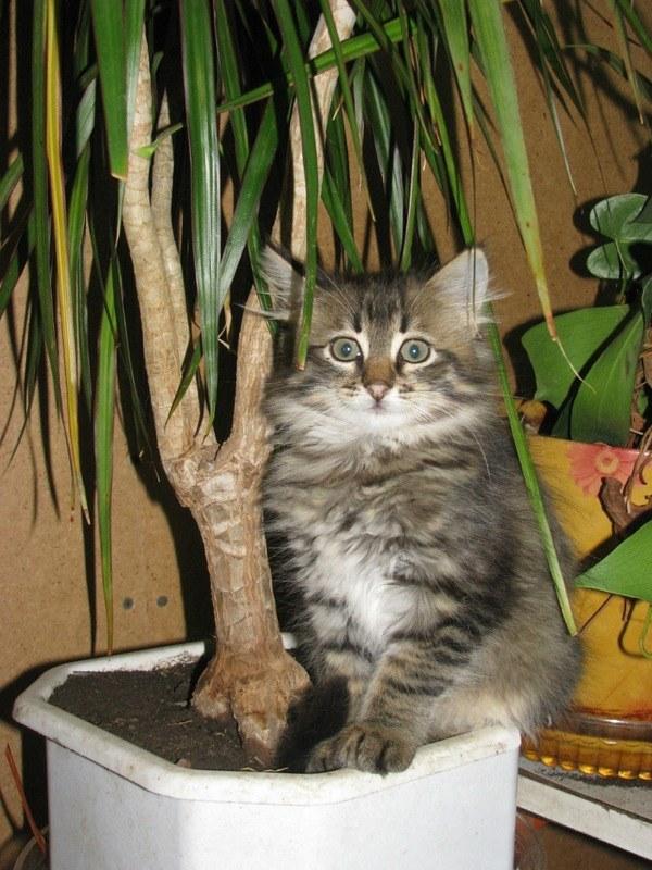 как избавить кота сделать туалет в горшки для цветов