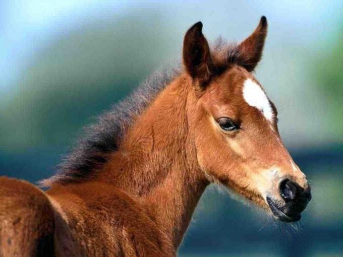 выращивать лошадей