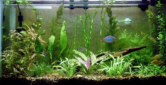 Как устранить течь аквариума