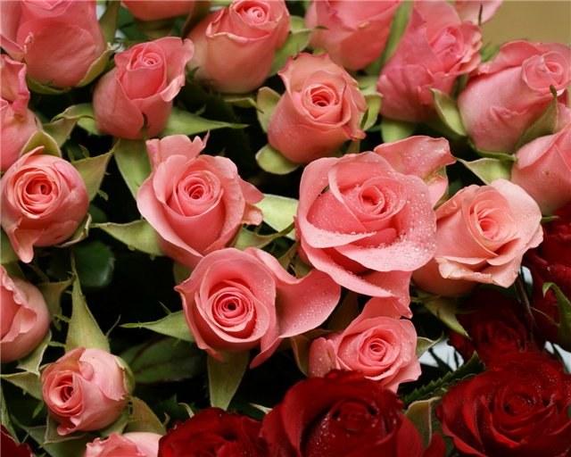 Как беречь срезанные розы