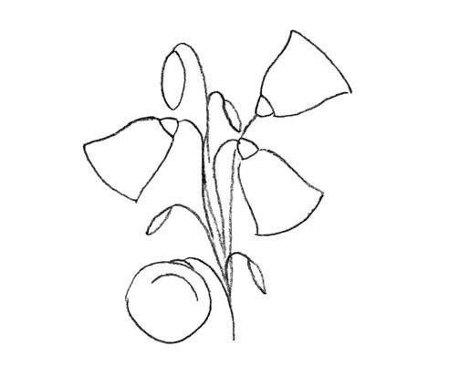 Как нарисовать цветок колокольчика