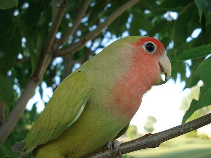 говорить можеть любой попугай