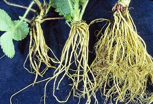 Почему у растений есть корни