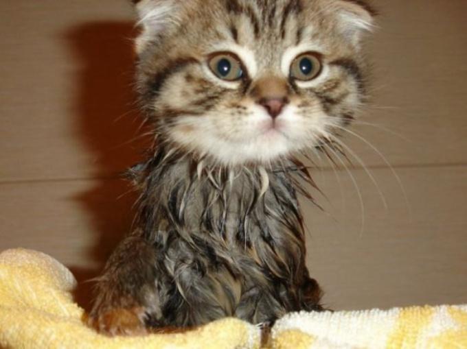как спасти маленького котенка оберечь
