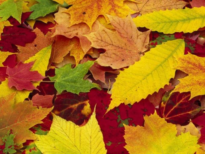 Почему растения меняют окраску