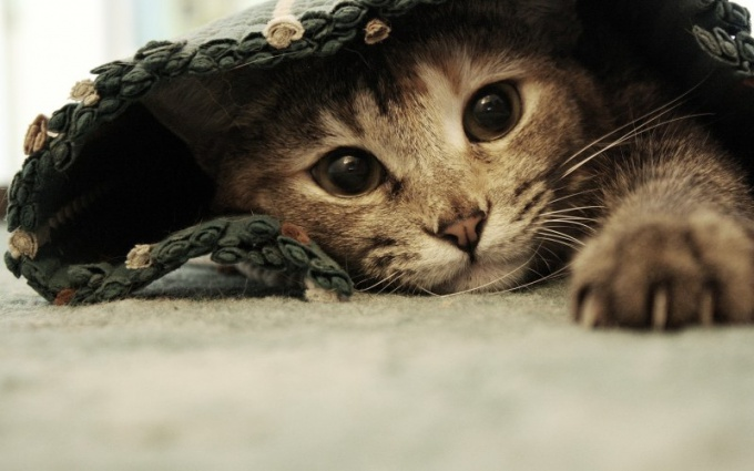 что делать чтобы у кошки не лезла шерсть