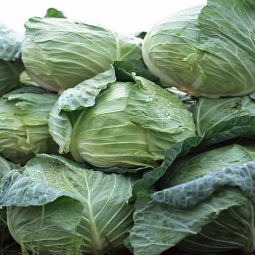 Как квасить капусту на зиму