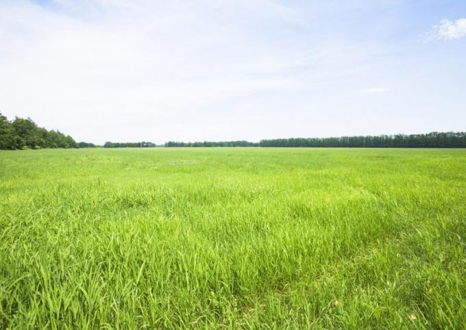 Как оценить стоимость земельного участка