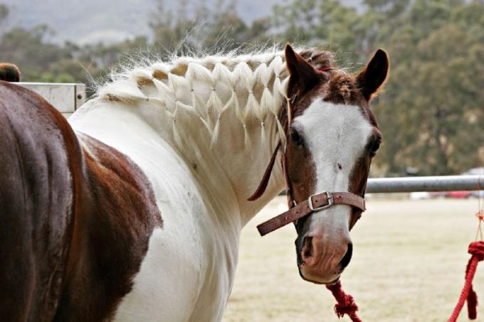 как ухаживать за гривой коня