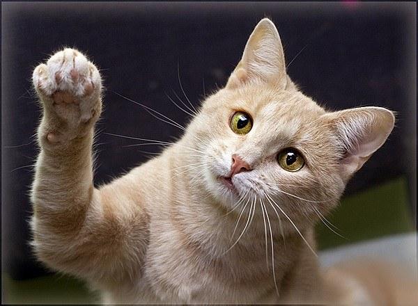 Как котенку сделать родословную 133