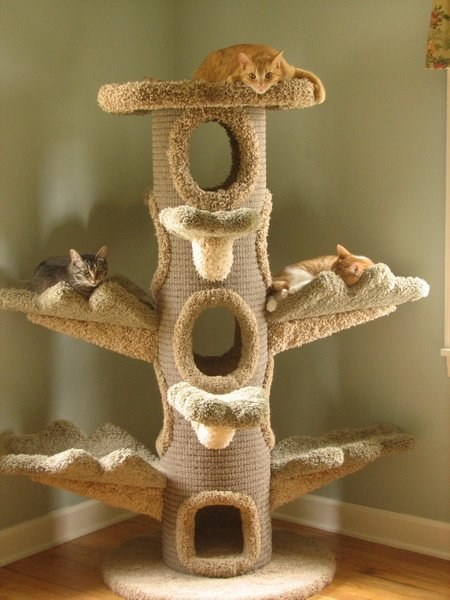 Как построить кошкин дом