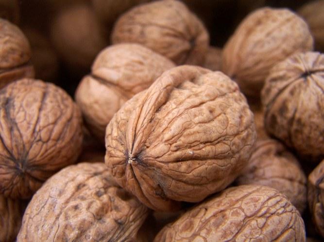 How to germinate a walnut