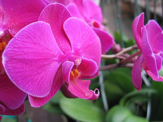 How to transplant an Orchid, if it blooms