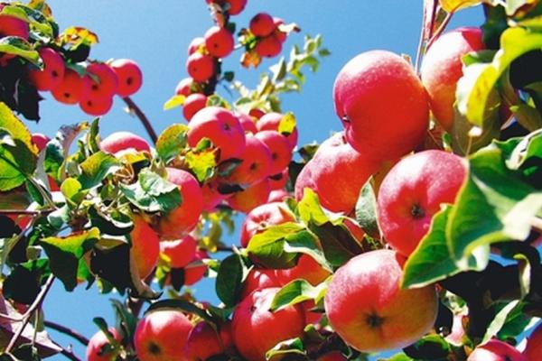 Как посадить плодовый сад