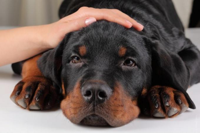 когда дают раствор марганцовки собаке?