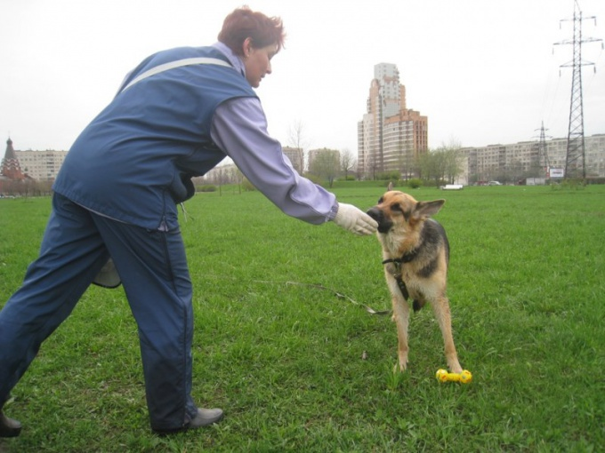 дрессировка взрослой собаки команда рядом