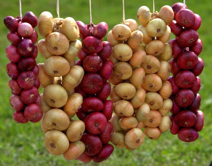 Как сохранить репчатый лук