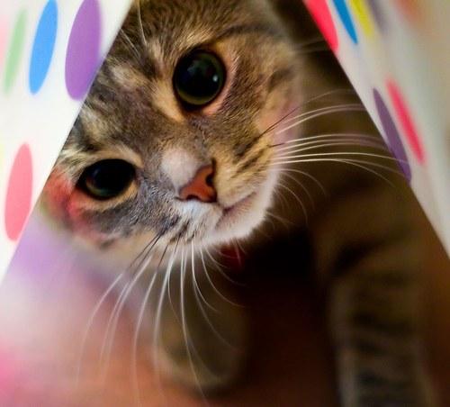 чем вывести ушного клеща у кошки