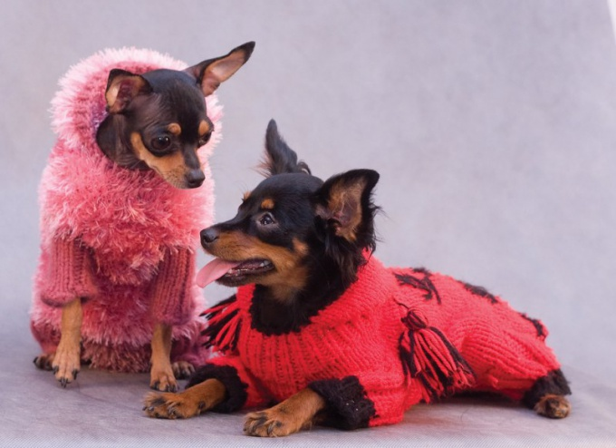 How to knit a sweater for toy Terrier