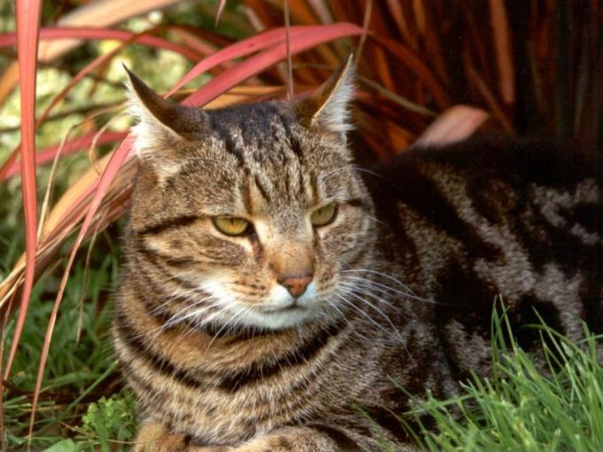 зуд как причина глистов у кошки