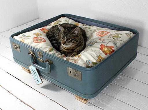 как сделать место для кошки