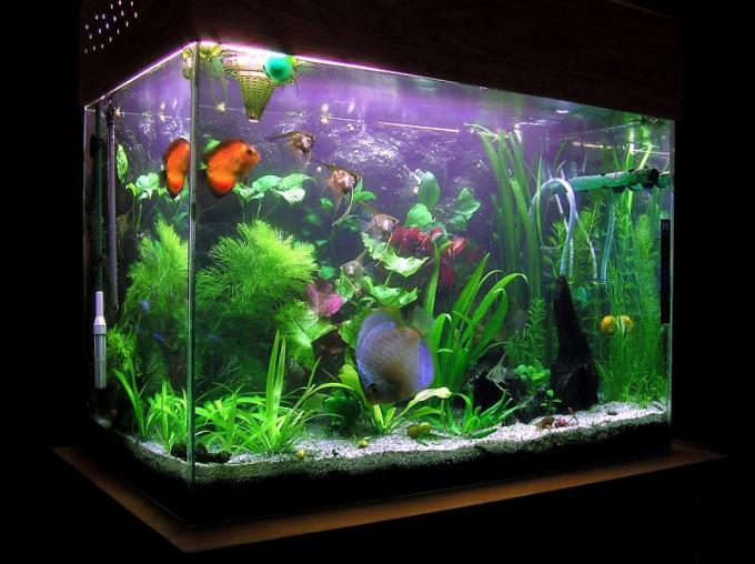 как починить трещины в углу аквариума