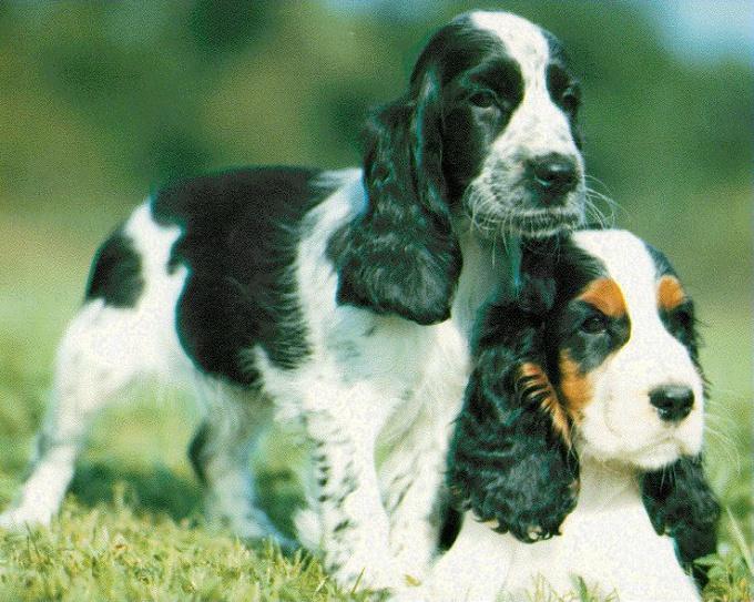 как обращаться с щенком