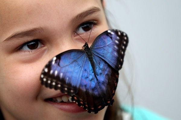 Как организовать выставку бабочек