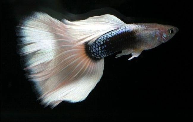 как различать рыб