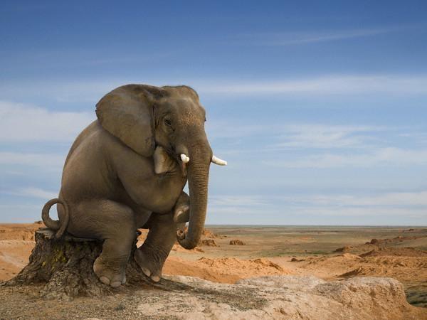 как сделать хобот слона