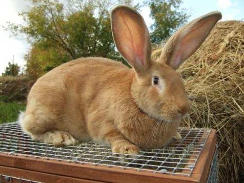 делаем клетку для кролика великана сами