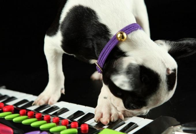 Как научиться играть на синтезаторе без нот