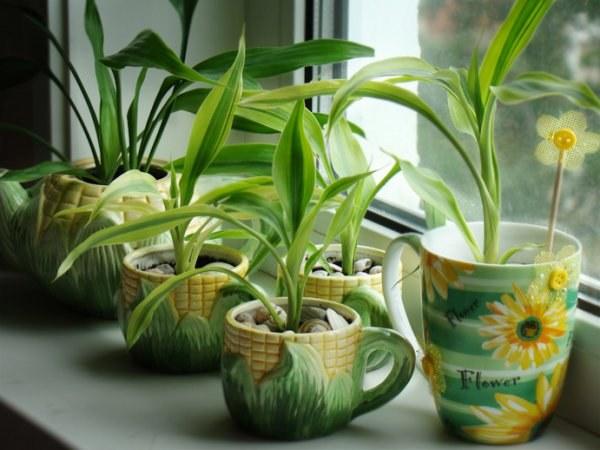 Как сажать домашние цветы