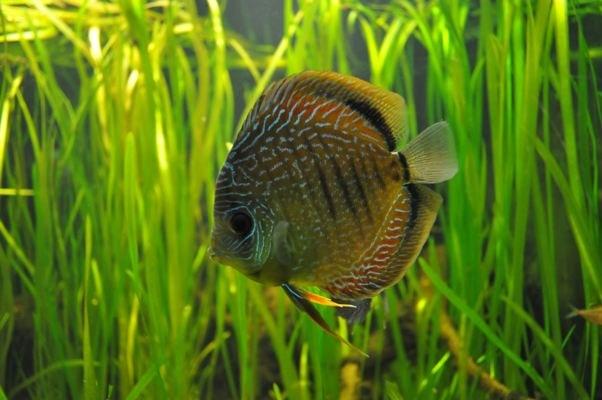 как очистить аквариум от зелени