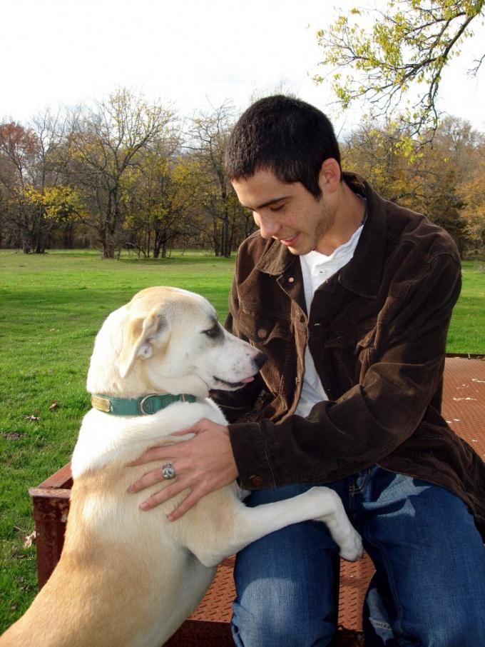 как приручить собаку взятую с улицы
