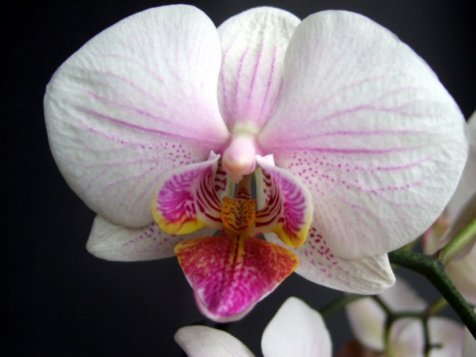 How to trim Phalaenopsis