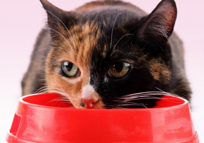 лечение печени у котов
