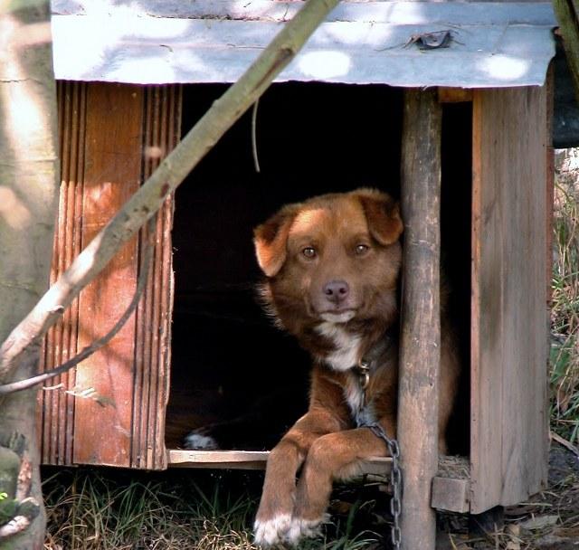 Как сделать домик для собачки