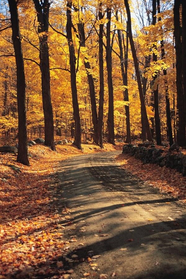 Почему осенью листопад