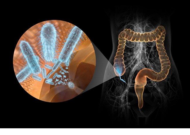 Как провести восстановление микрофлоры кишечника после антибиотиков