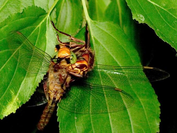 Что такое естественный отбор