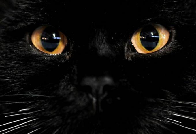 у кошек светятся глаза