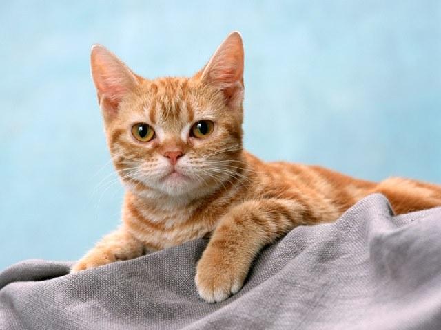 выбрать кошачий сухой корм