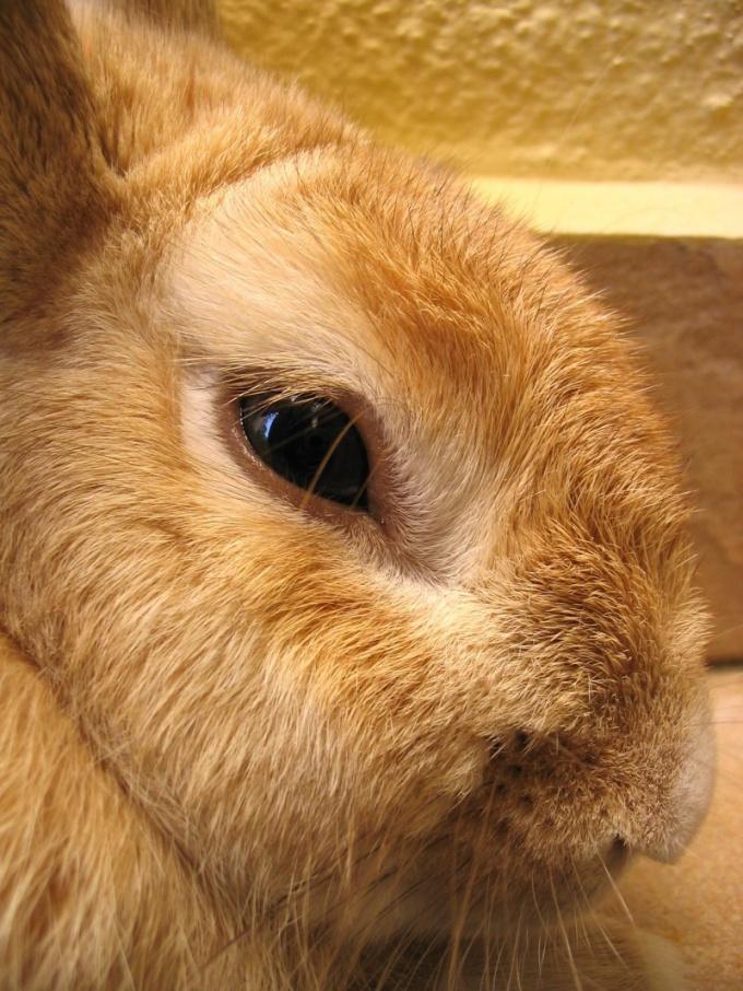 можно кормить кроликов зимой