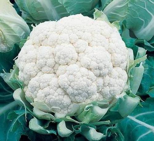 Как готовить цветную капусту